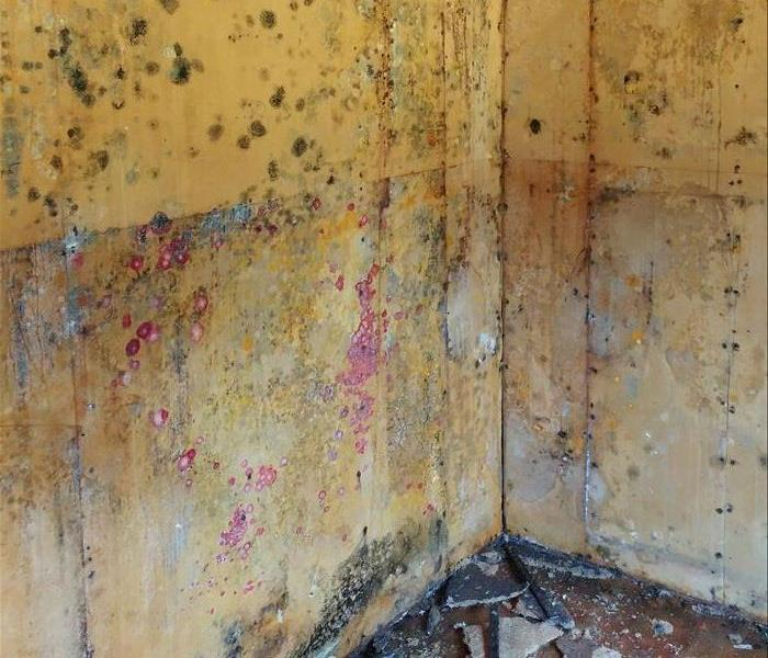 Mold Remediation Cleaning Mold Damage in Calaveras County
